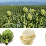 turkey-artichoke-manufacturers